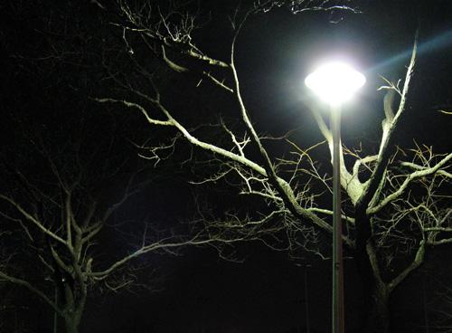 nightbranch